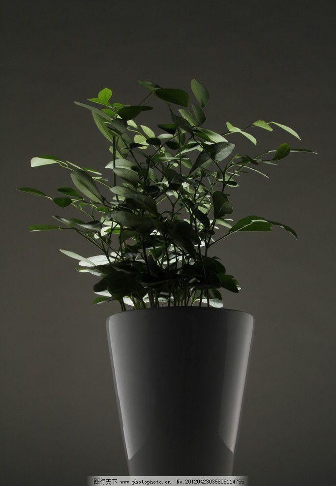 盆栽 逆光 绿叶植物 花盆 树木树叶 生物世界 摄影 72dpi jpg