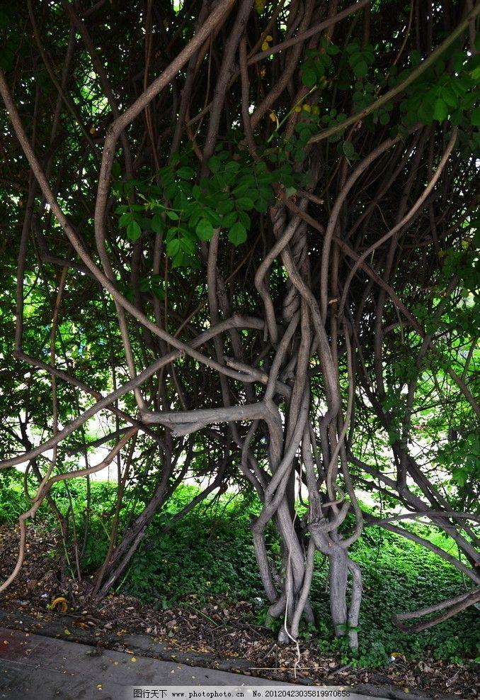 缠藤树 绿地 紫藤 树木树叶 生物世界 摄影 300dpi jpg