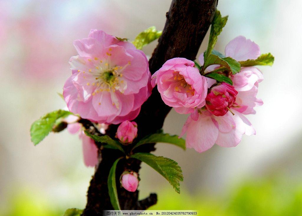春天花朵蓝天高清壁纸