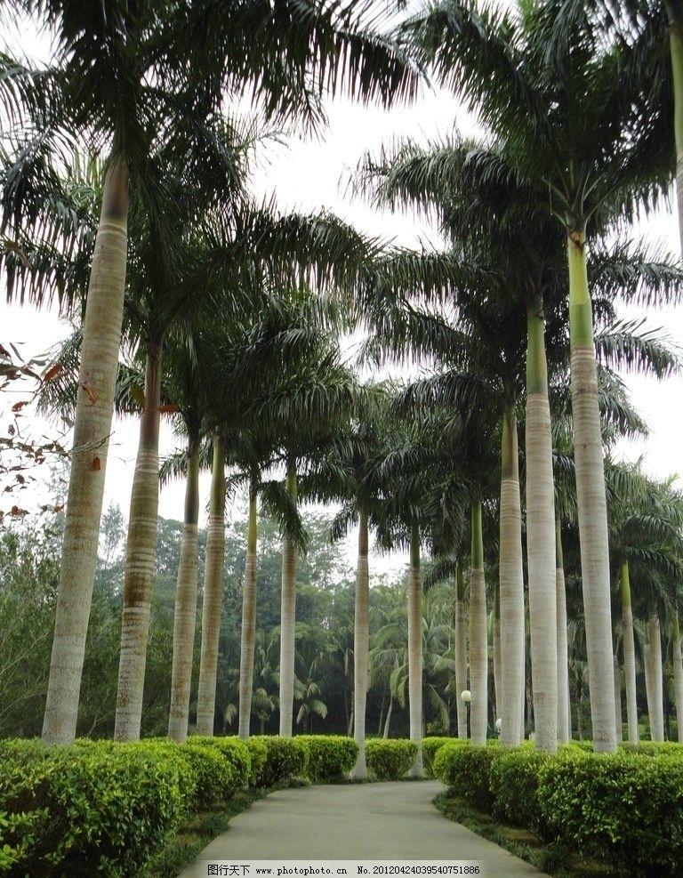三亚植物 三亚 植物 导弹树 热带植物 小路 森林 椰子树 园林建筑