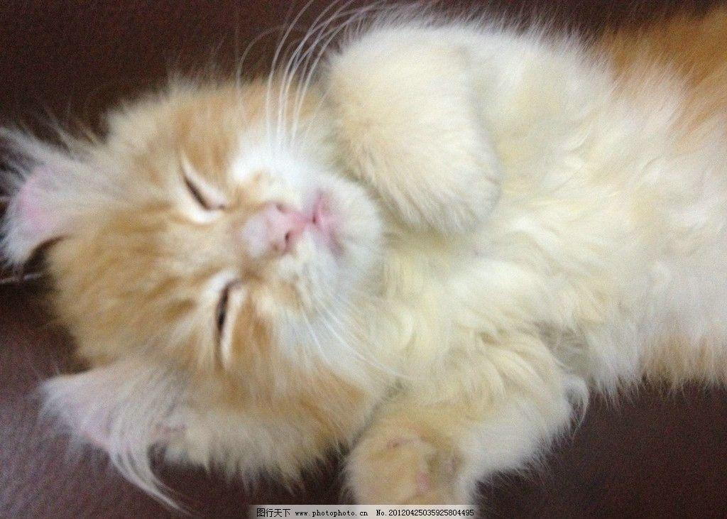 可爱猫 动物 野生动物 宠物 猫 家禽家畜 生物世界 摄影 72dpi jpg