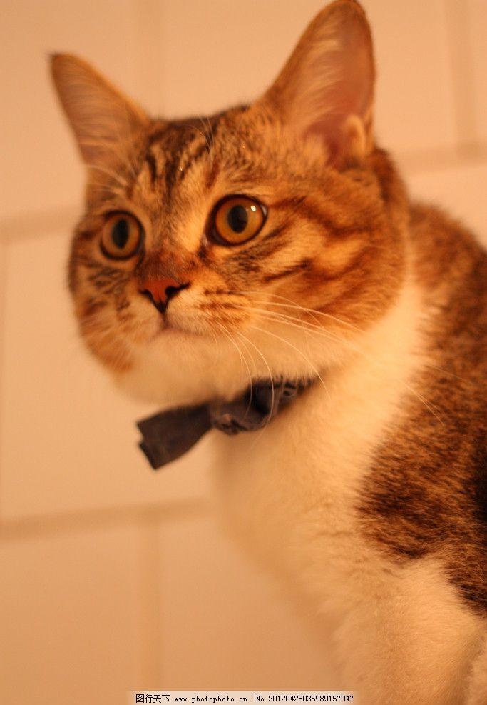 猫斜正面图片