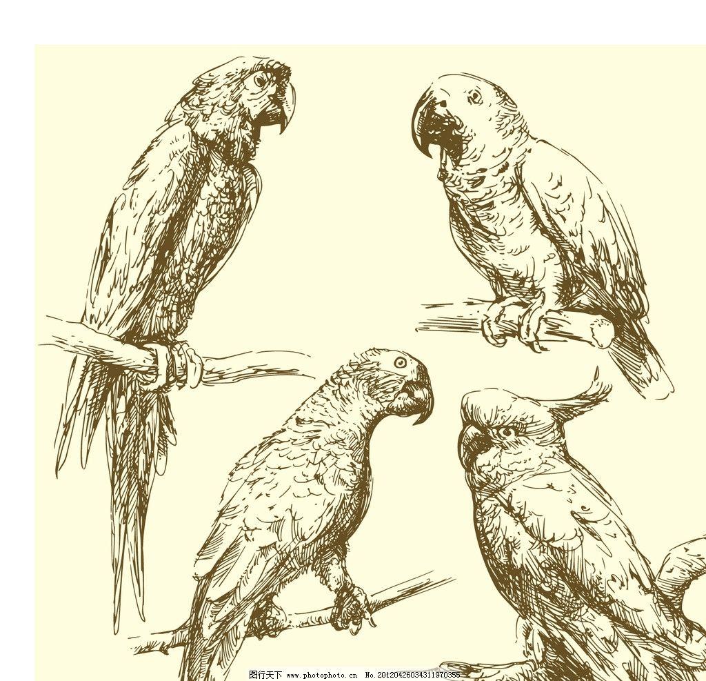 手绘鹦鹉图片