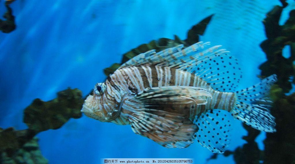 壁纸 动物 海底 海底世界 海洋馆 水族馆 鱼 鱼类 1024_572