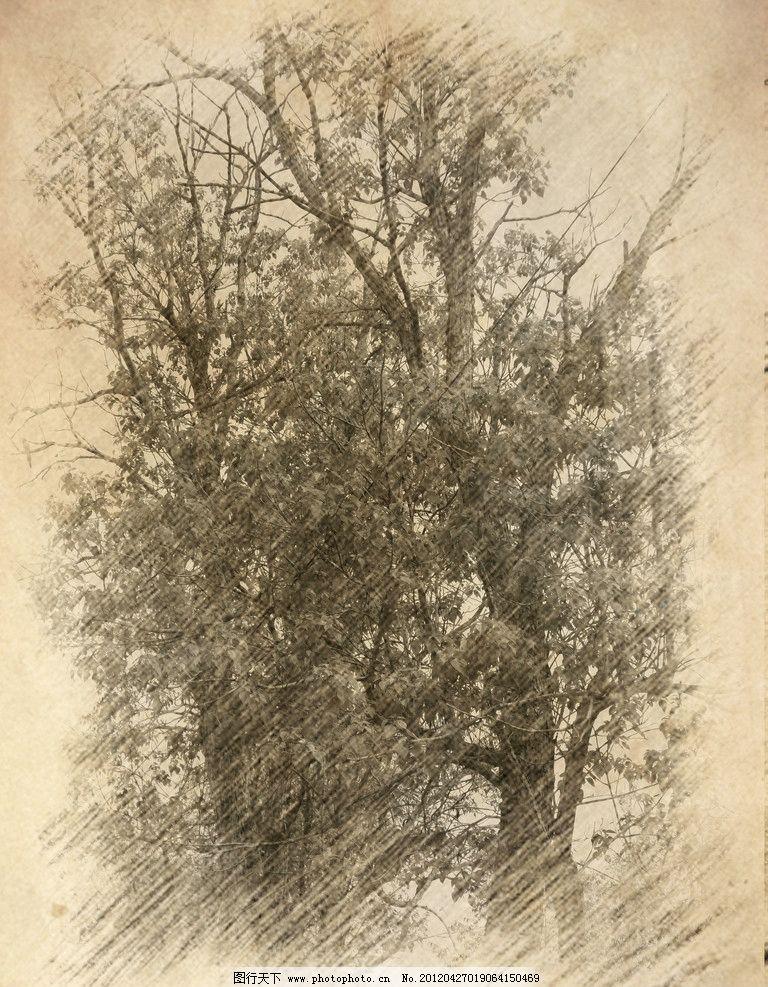 树木素描 素描 素描素材