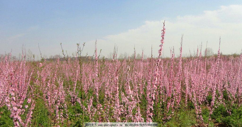 花都鄢陵园林风景图片