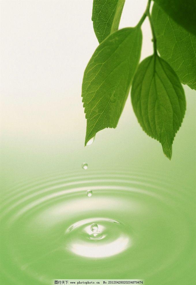 绿叶 阳光 绿色 清新 叶子 水纹 水滴 背景底纹 底纹边框 设计 300dpi