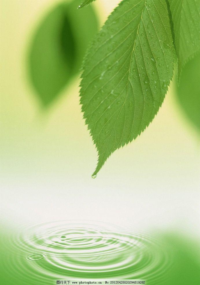 绿叶 绿色 清新 叶子 水滴 水纹 背景底纹 底纹边框 设计 300dpi jpg
