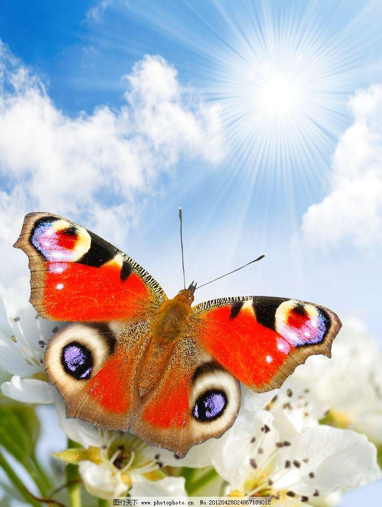 蝴蝶 天空 新鲜 昆虫 春天 樱花 花 花卉 蓝天 生物世界 设计 300dpi