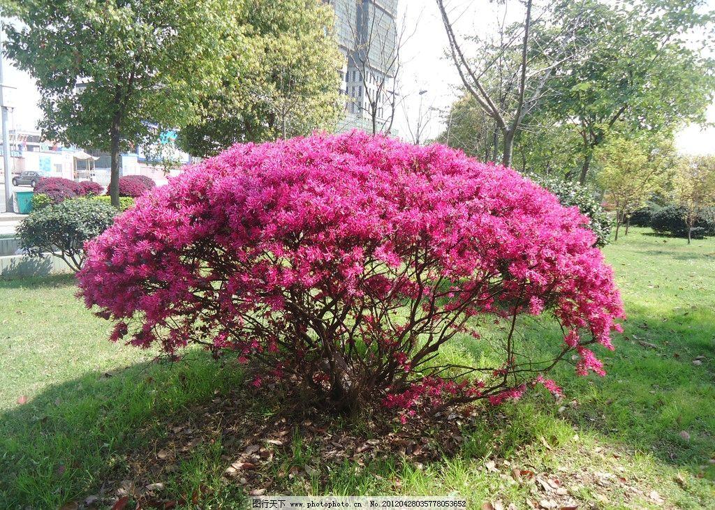 红色的花 红花 花朵 草地 树木 郊外 花草 生物世界 摄影 72dpi jpg