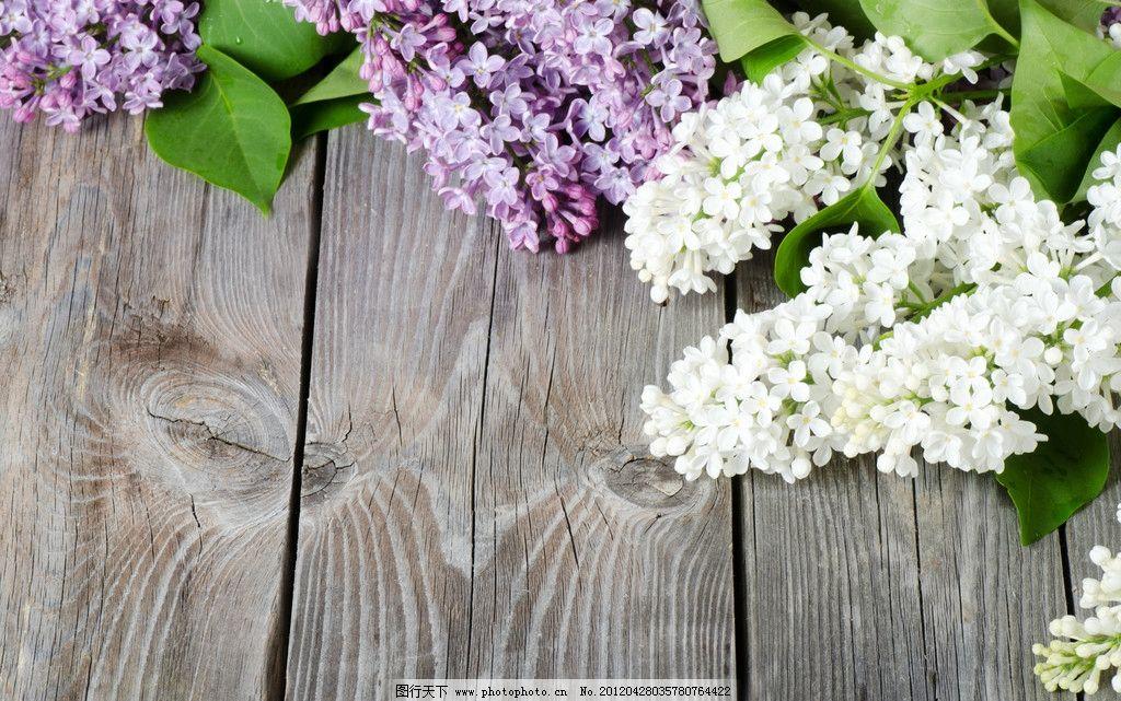 鲜花素材 木板