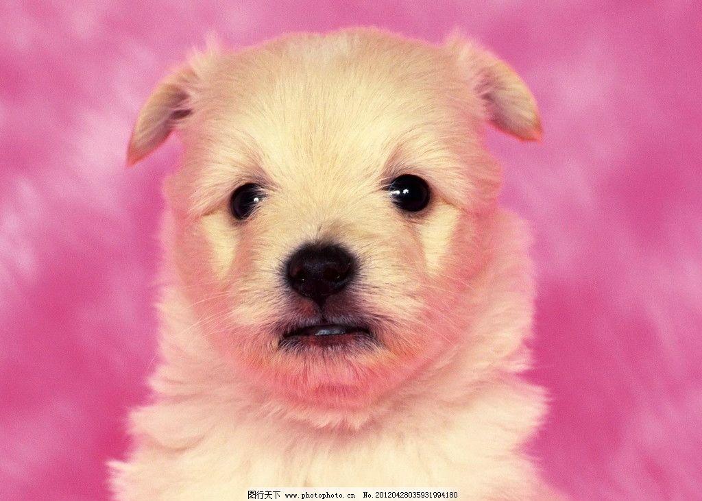 宠物狗 可爱 宠物 温馨 小狗 家禽家畜 生物世界 摄影 72dpi jpg