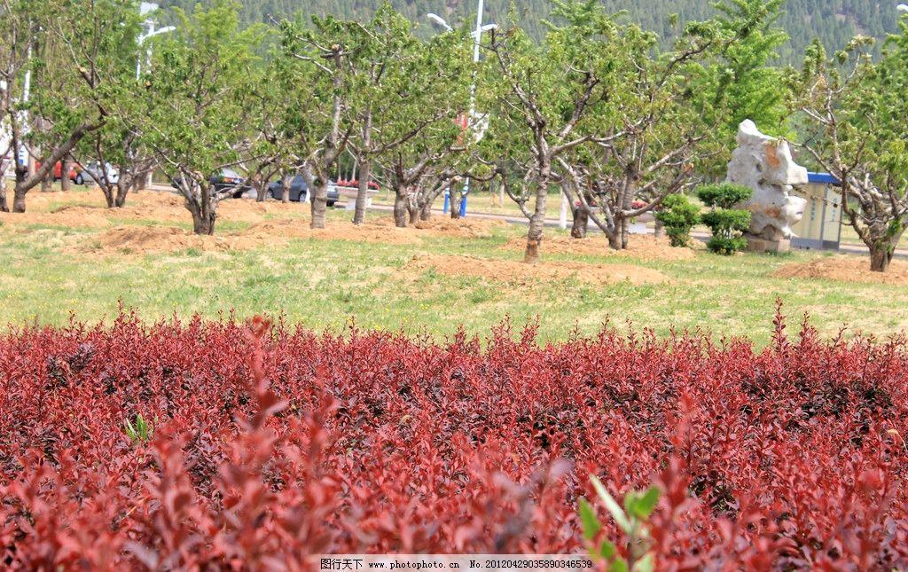 花丛 花朵 红花 绿树 树木 绿色 红色 树木树叶 生物世界 摄影 72dpi