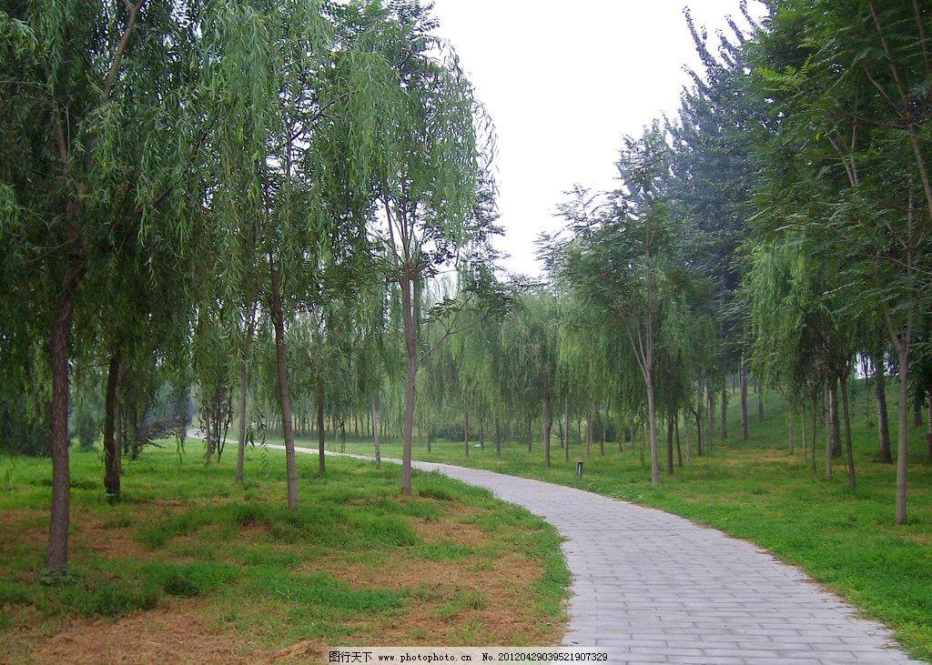 林中小径 夏天 绿色 树林 树木 小路 园林建筑 建筑园林 摄影 230dpi图片