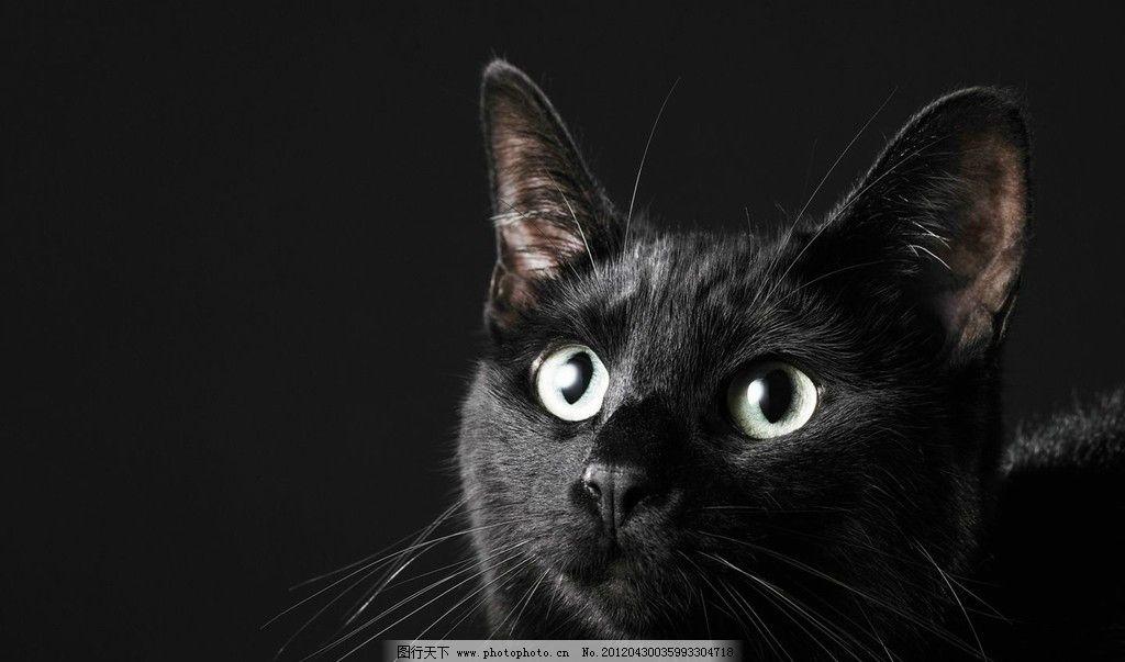 动物眼睛画法图片