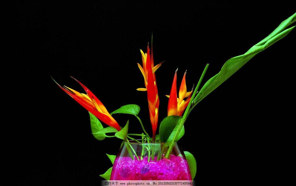鲜花植物图片