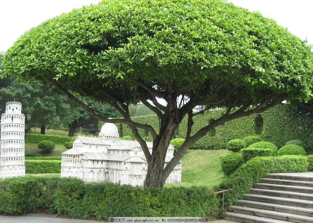 自然风景 树 绿色植物 绿色背景 生态风景 丛林 环保素材 树木树叶