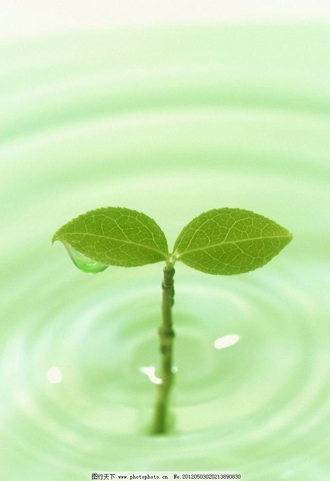 绿叶 绿色 清新 叶子 水 水纹 水滴 背景底纹 底纹边框 设计 300dpi图片