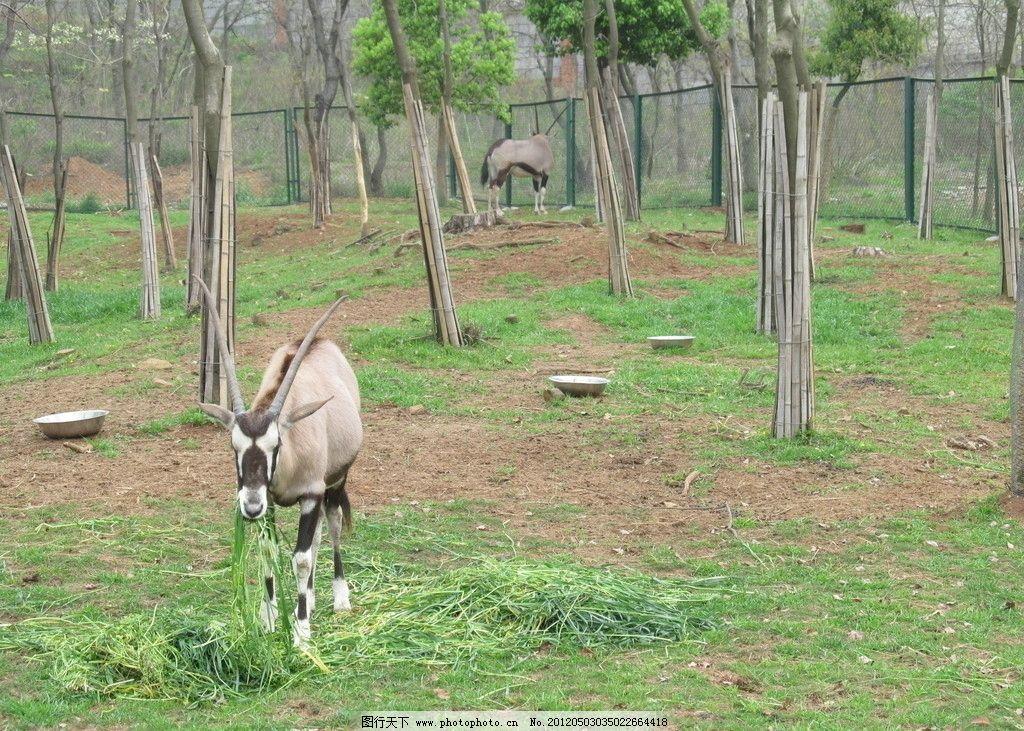 羚羊 动物 野生动物 公园