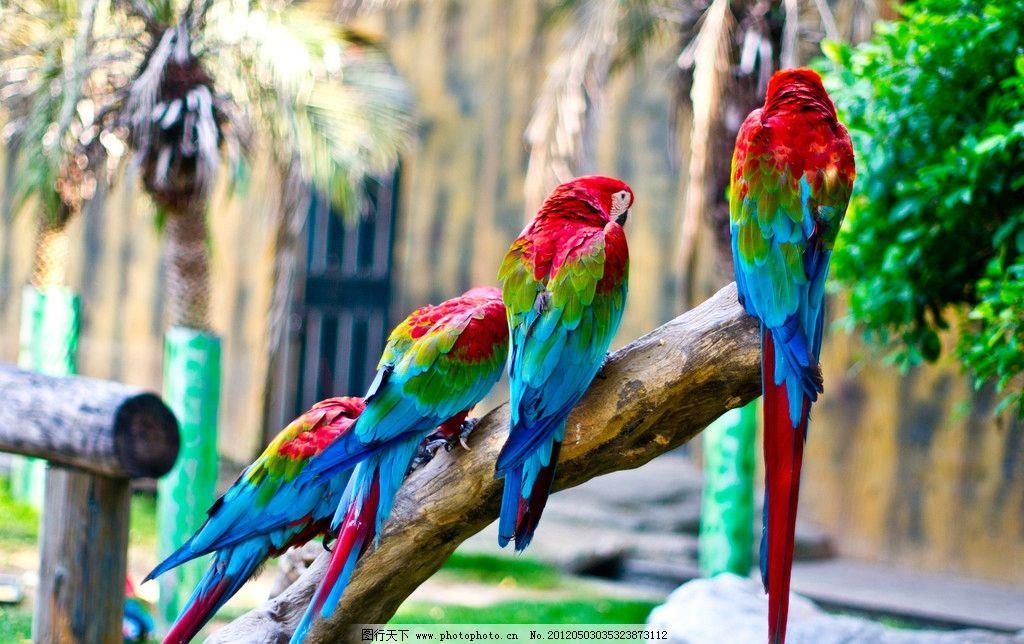 鹦鹉 南宁动物园 动物园