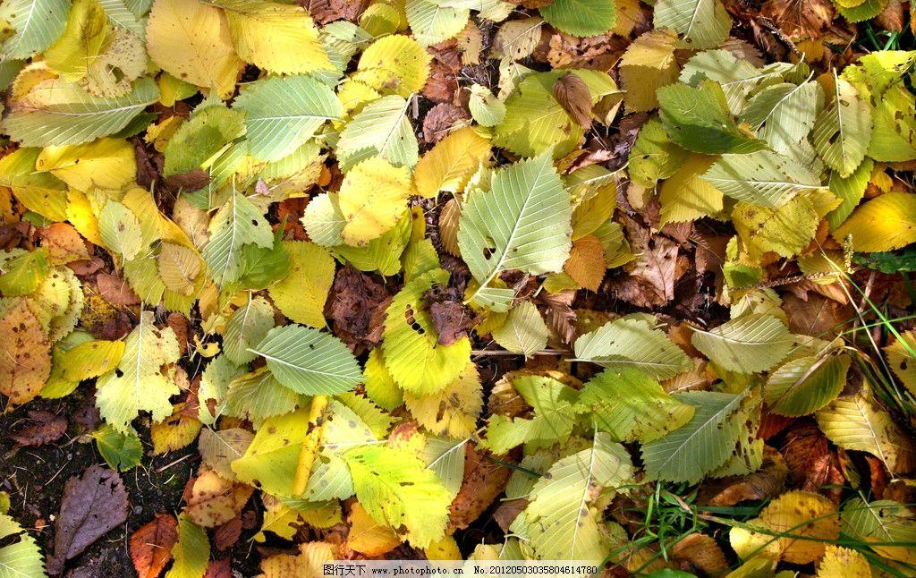 树叶落叶 枯叶 黄叶 秋天 秋季 摄影图片