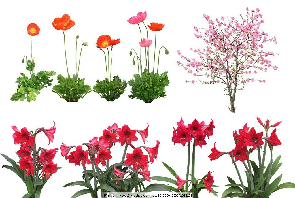 植物素材 高精度 花 草 树 ps 后期 用 psd分层素材 源文件 300dpi