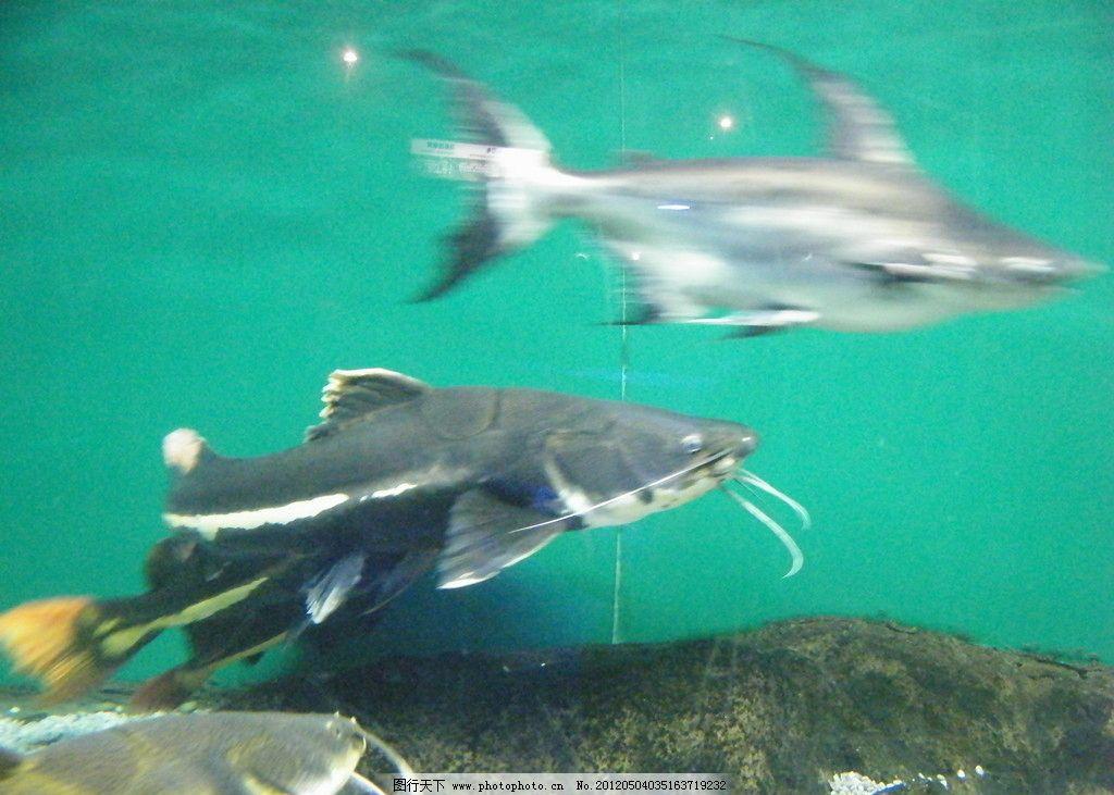 海底鱼类 海底世界 海底动物 鱼群 石头 海底图片 鱼类 生物世界 海底