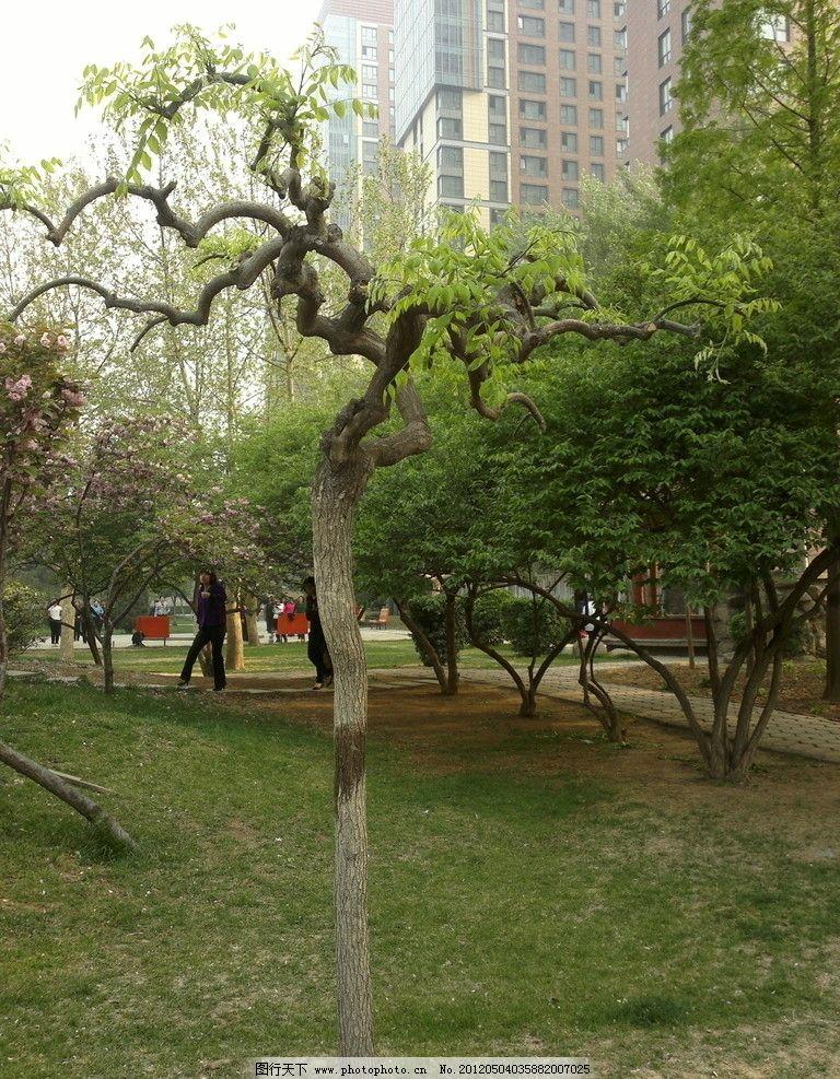 春天的公园 春天 公园 清晨 含苞待放 树木 晨练 老人 美景 树木树叶