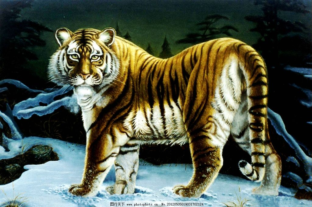 回眸 美术 油画 动物画 猛兽 老虎画 老虎 雪地 油画艺术 油画作品32
