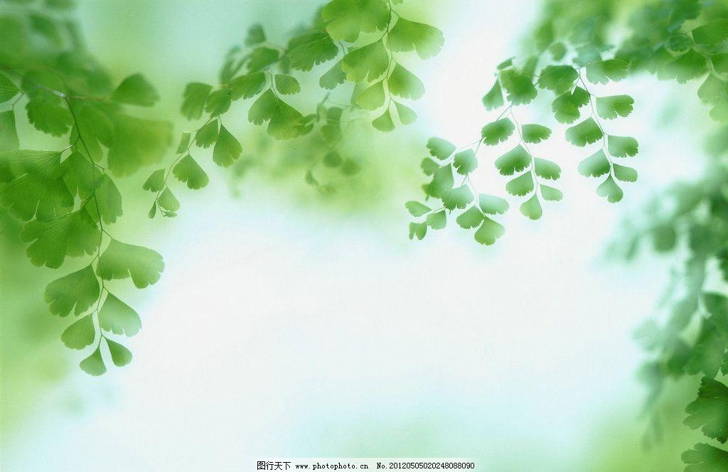 绿叶 绿色 清新 叶子 绿荫 生物 背景底纹 底纹边框 设计 300dpi jpg