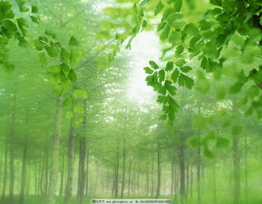 绿色森林 绿叶 阳光 清新 叶子 光芒 摄影