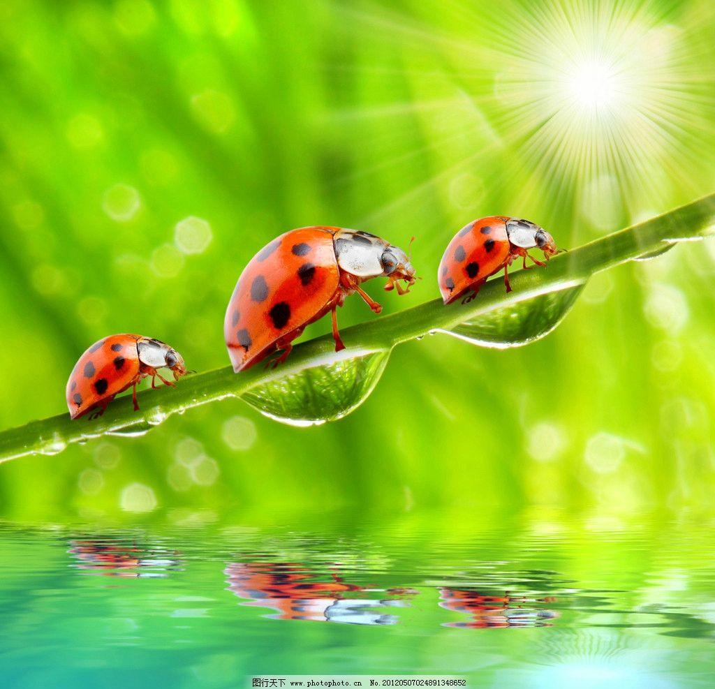 七星瓢虫图片图片