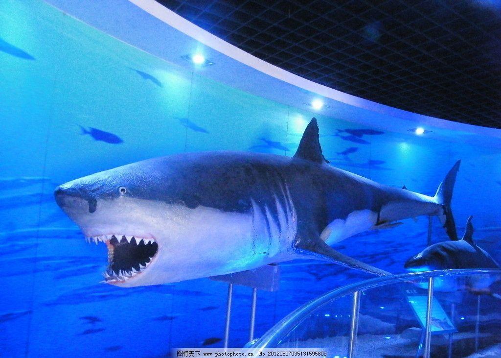 海底世界 海底鱼类 鲨鱼 海底动物 鱼群 海底图片 鱼类 生物世界 海底