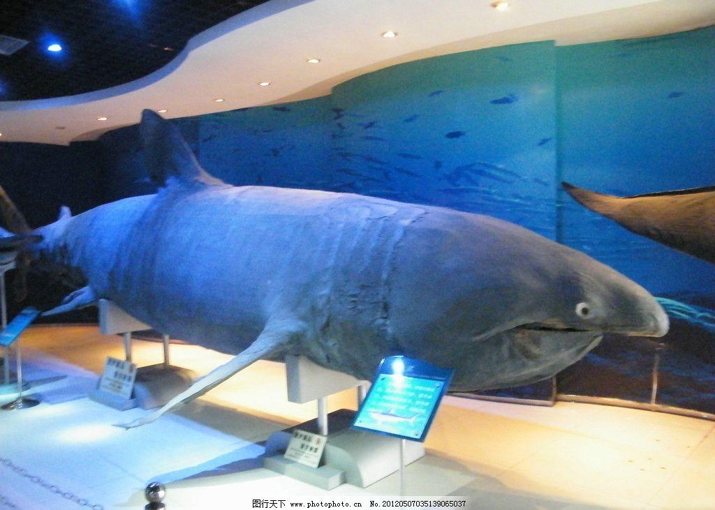 海底鱼类 海底世界 海底动物