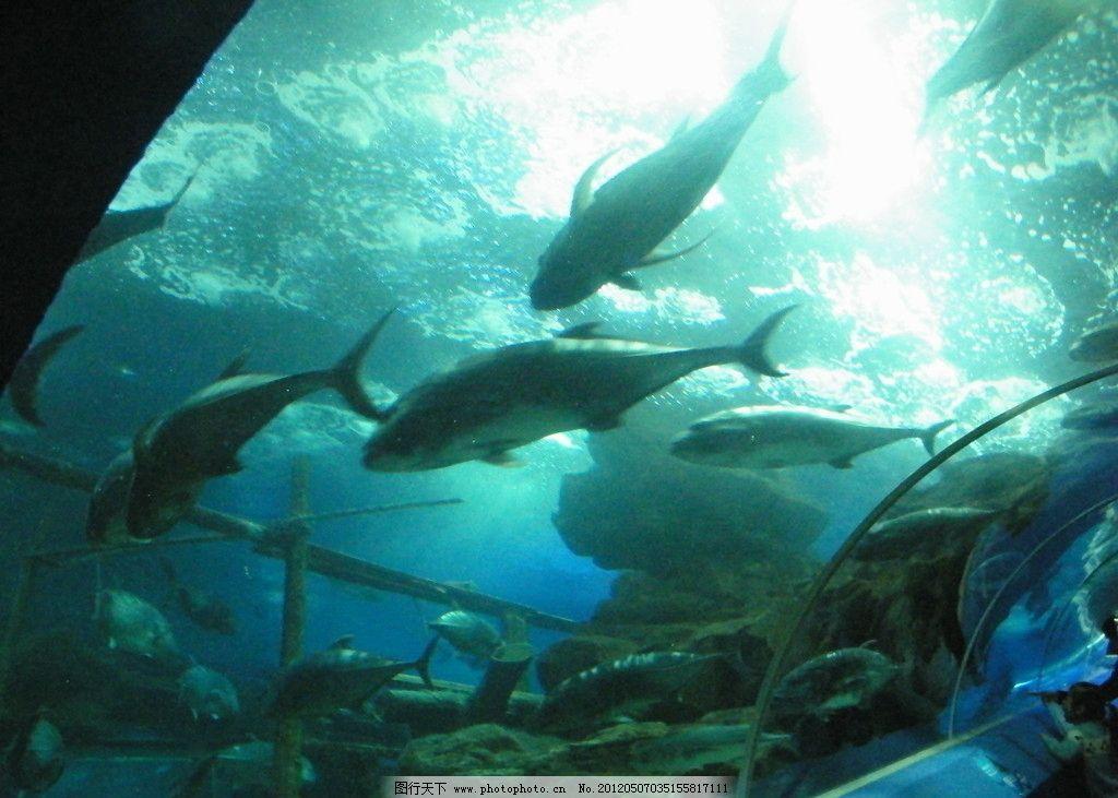 海底世界 海底鱼类 海底动物