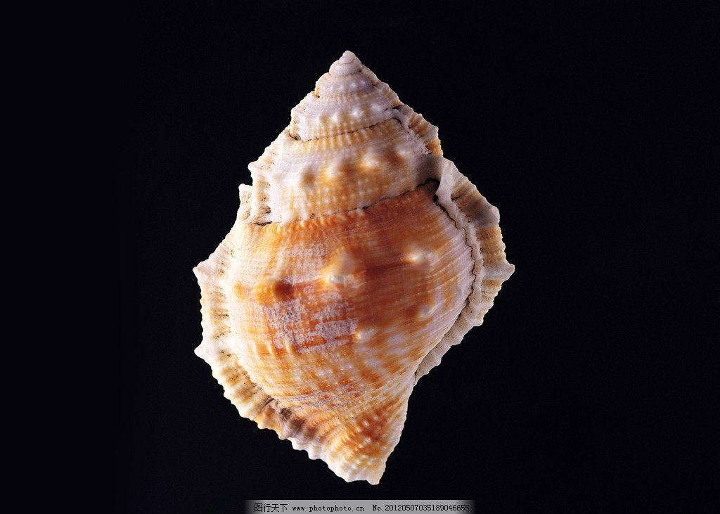 海螺 大海 海洋 海生物 海洋动物 螺蛳 田螺 软体动物 螺号