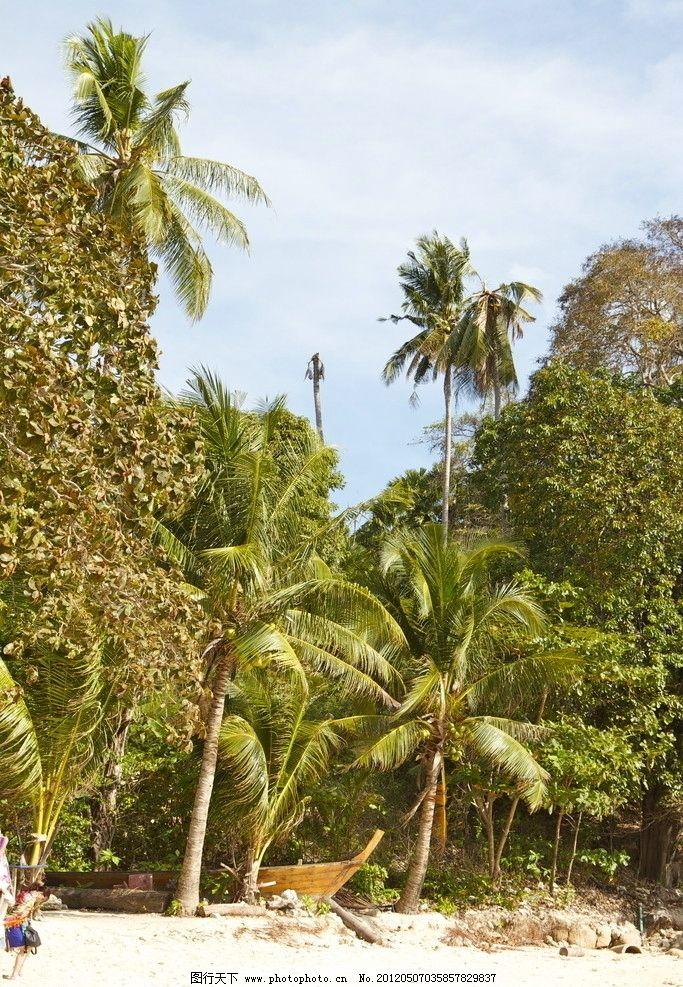 普吉岛 布吉 泰国 沙滩 蓝天 白云 椰子树 椰子林 热带 树木树叶 生物