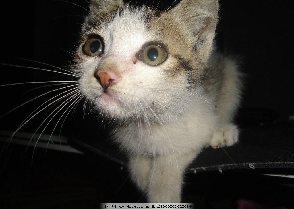猫咪特写镜头 猫咪 特写 镜头 背景 美图 动物 家禽家畜 生物世界