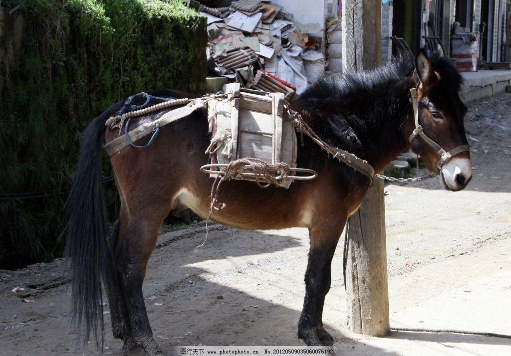 马儿 站立 动物 家畜 野生动物 生物世界 摄影 72dpi jpg