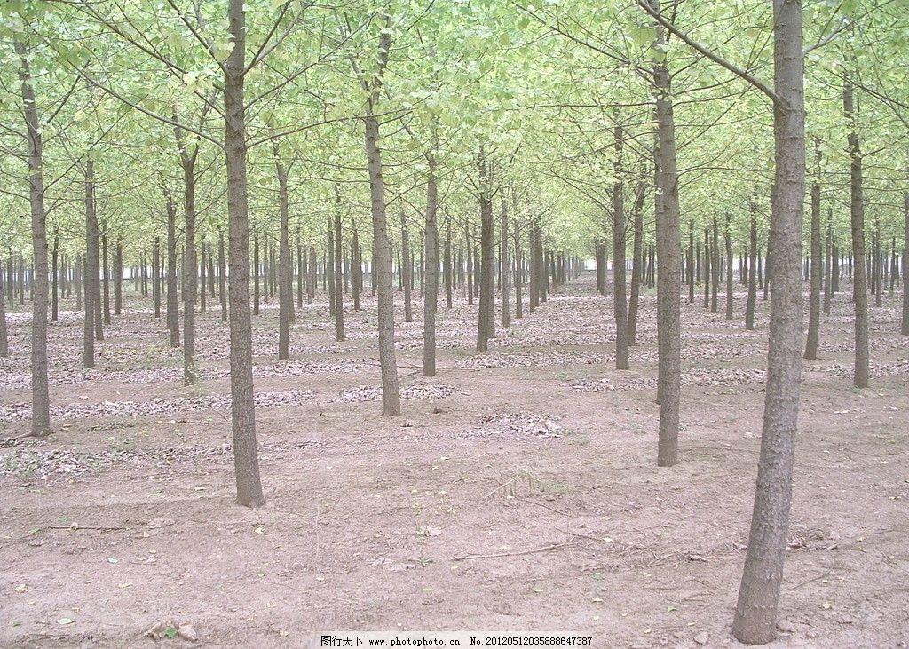 小树林 树木 树林 森林 花园 生命 自然风光 春天 绿树成荫 树木树叶