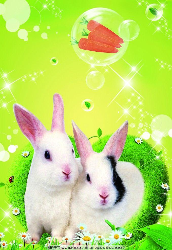 背景色 两只小兔子