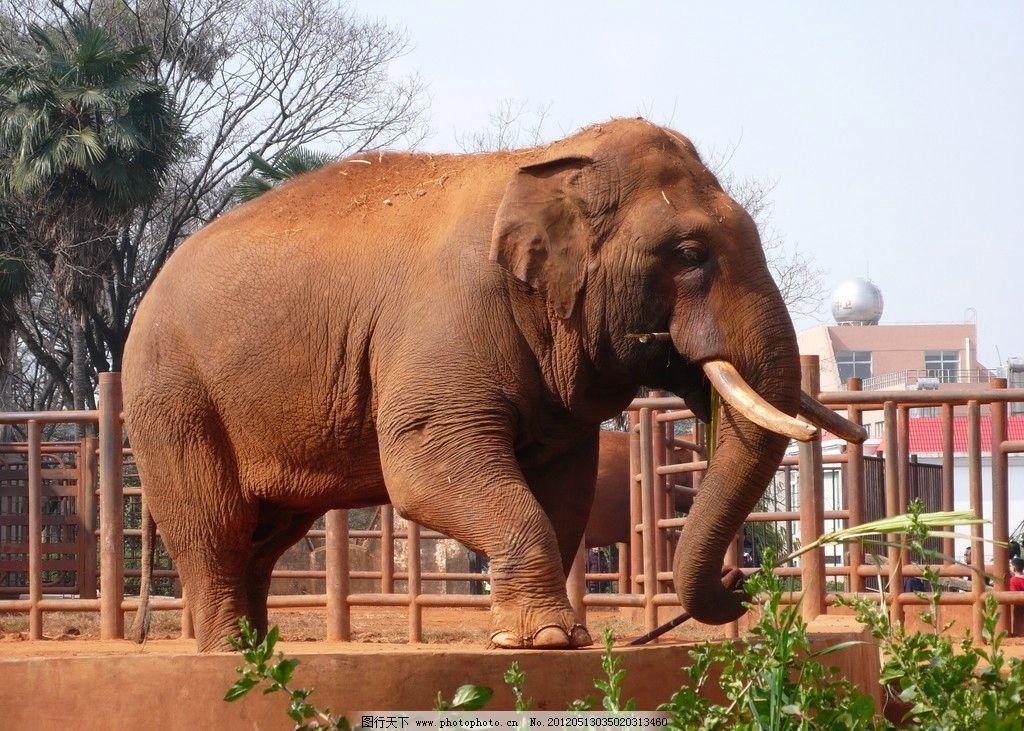 亚洲象 昆明动物园 昆明 动物园 野生动物 生物世界 摄影 72dpi jpg