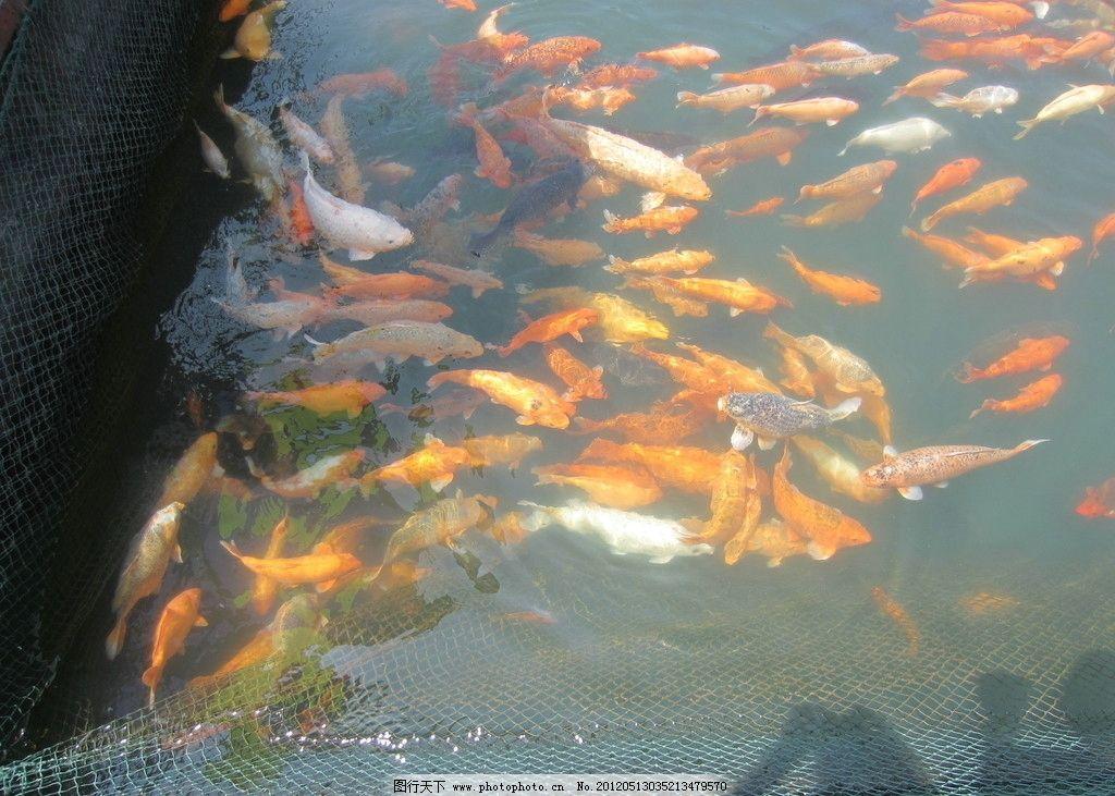 千岛湖鱼儿图片