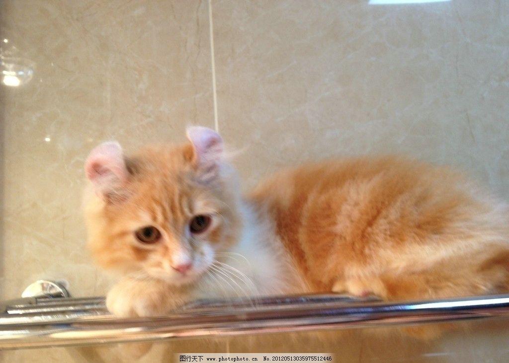 猫咪 动物 可爱猫咪 家禽家畜 生物世界 摄影 72dpi jpg