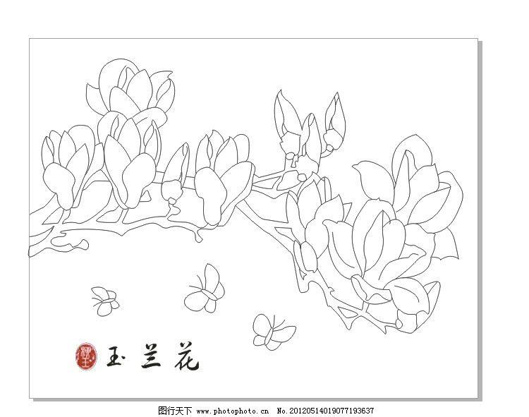 玉兰花 白描 工笔画 花