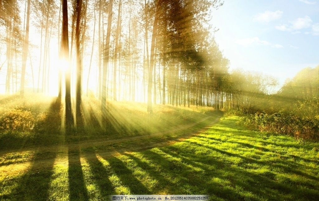 阳光小道 宜人美景 林荫小道 树木 树下 夕阳 城市风景 绿化