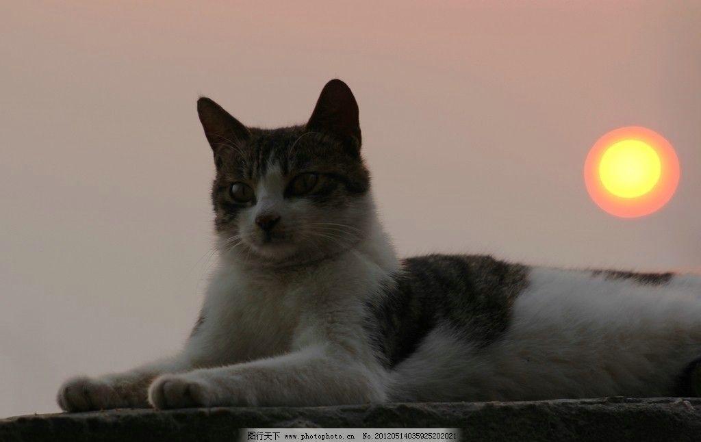 小猫 动物 野生动物 可爱 摄影