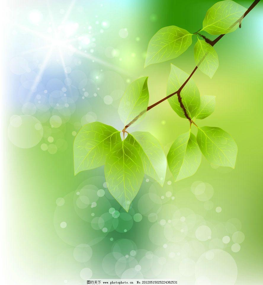 阳光绿叶背景图片