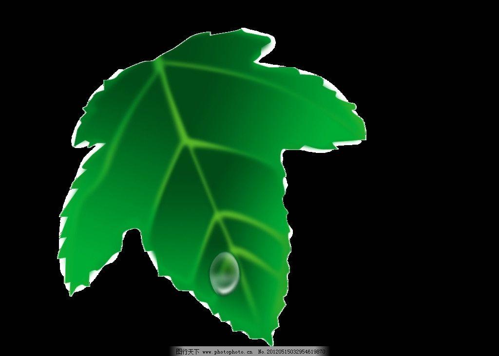 带水珠的树叶 树叶 叶子 水珠 滴水的树叶 绿叶 叶 psd 背景素材 psd