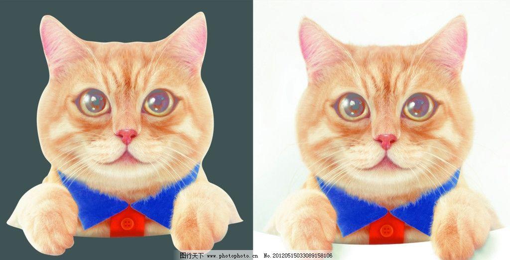 小猫 可爱的小猫 小花猫 猫咪 其他 psd分层素材 源文件 450dpi psd